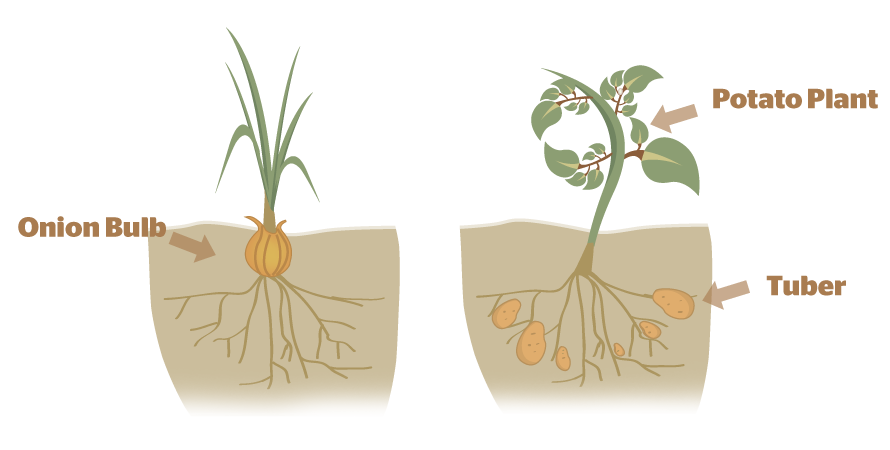How do plants reproduce asexually? I. - B4FA