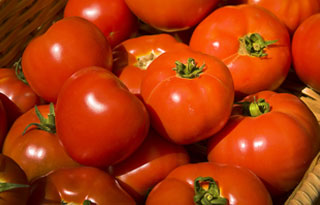 An obvious feature of the domesticated tomato plant is the massive increase in fruit size in some cultivars. Another feature is the development of a very wide range of fruit shapes. Wild tomatoes bear fruits that are almost invariably round, while cultivars available today can be round, oblate, pear-, torpedo- and bell-shaped.