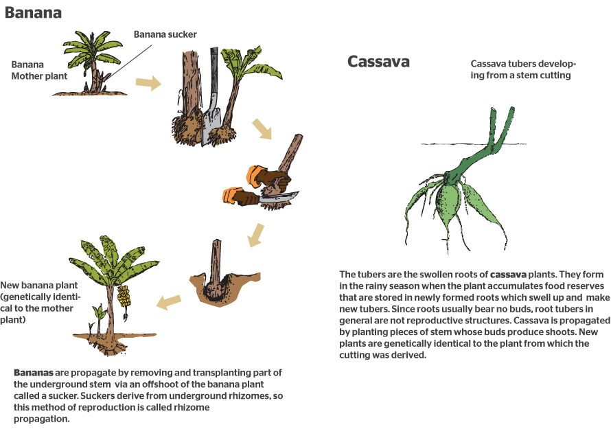 How-do-plants-reproduce-sexually