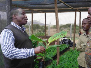 Mr. Mushobozi explaining tissue culture