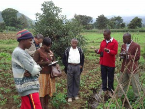 in the tomato field with farmer Allan and Mr Swai
